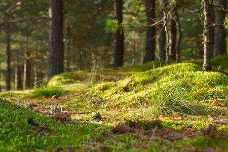 Beautiful summer day in the forest around the green trees, moss Banco de Imagens