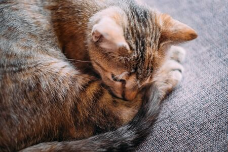 Cute kitten of tortoiseshell color lying curled up on a sofa.