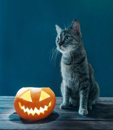 Cute cat sitting near Halloween jack-o-lantern glowing pumpkin on dark background. Stok Fotoğraf
