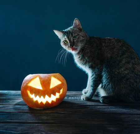 Cat sitting near Halloween pumpkin lantern on dark background. Stok Fotoğraf