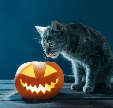 Cat sitting near jack-o-lantern pumpkin with burning candle in Halloween night. Stok Fotoğraf