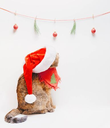 Cute ginger cat wearing in a Santa hat and bandana looking at Christmas and New Year decorations, copy-space in right part of image. Stock Photo