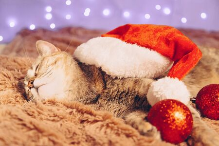 Christmas cute ginger cat in Santa hat sleeping on soft plaid with red balls decorations. Stock Photo