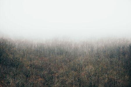 Beautiful autumn misty forest landscape. Fog over woods.