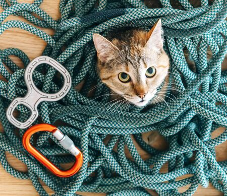 Cute curious domestic cat of ginger color lying on climbing rope with equipment and staring at camera.