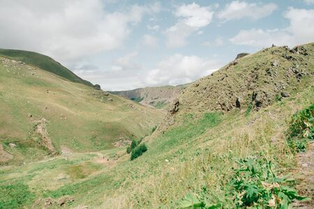 Summer landscape of mountain green grass valley.