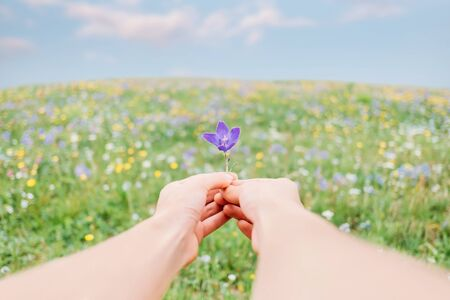 Young woman holding violet flower in summer meadow, point of view in first person.