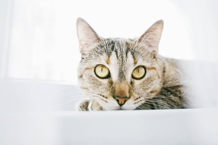 Domestic ginger tabby cat resting on white windowsill and looking at something. Stok Fotoğraf