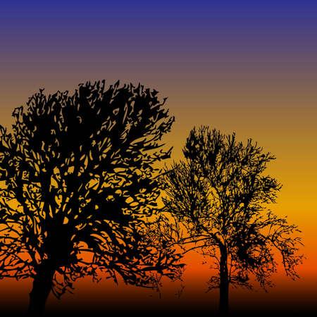 Orange and purple sunset with tree silhouettes Illustration