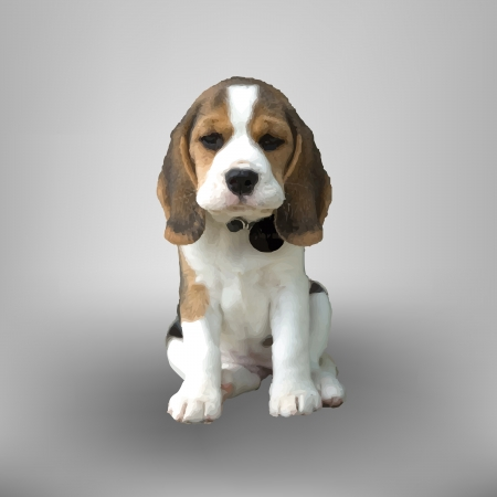 Little beagle on gray background
