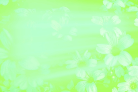 smudge: White gypsophila flower green smudge blurred soft floral abstract background