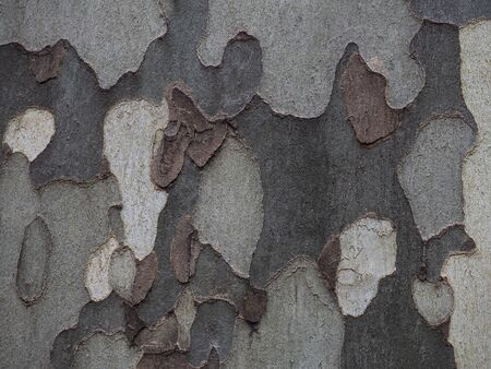Horizontal image round textures in the bark with different shades of gray and brown Stock Photo