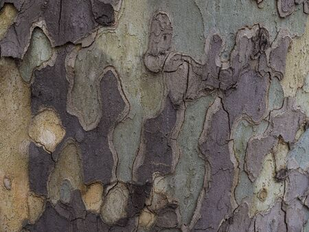 Horizontal photo textures in the bark with different shades of green, yellow and gray