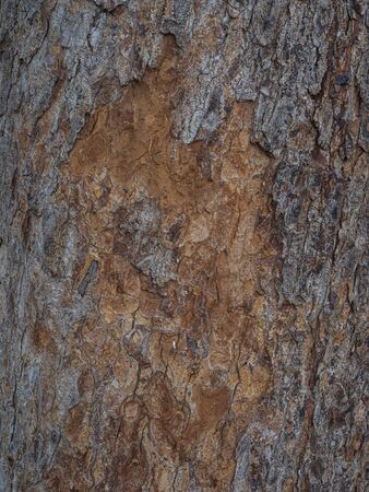 Vertical photo textures in the bark with different shades of brown