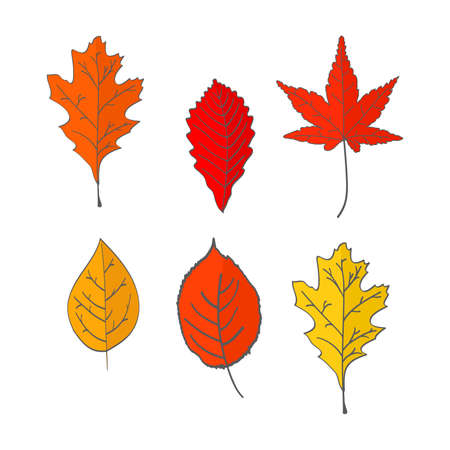 Set of autumn fallen leaves of yellow, red color. In flat style a vector.Oak, maple leaves. Vettoriali