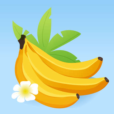 Tropical fruit ripe banana with palm leaves icon on blue background.
