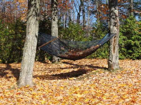 Hammock in Autumn season
