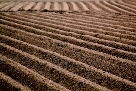 furrow: Agriculture: furrows in fields