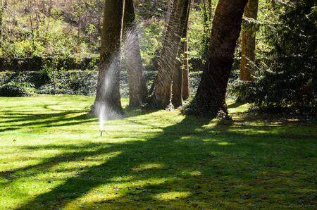 cut grass: Garden water hose on a well groomed freshly cut grass