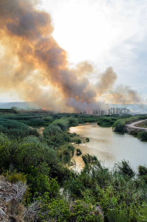 Fire caused by the destruction  humans.