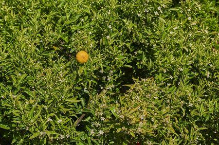 blooming orange fields flower background in the spain Zdjęcie Seryjne