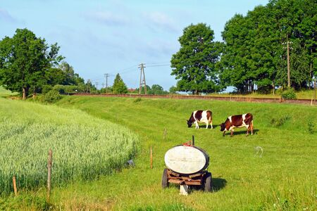telegraphy: Cows and the water tank at the countryside