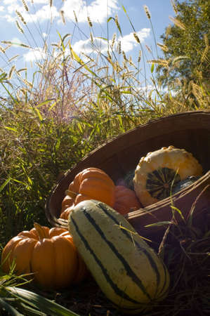 Basket of colorful gourds