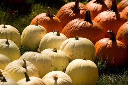 Orange and white pumpkins in Autumn Stock Photo