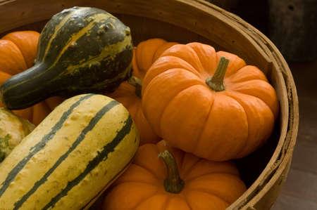 Basket full of fresh picked gourds