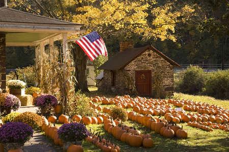 Farmhouse in Autumn Editorial