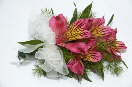 Pink Freesia corsage Stock Photo