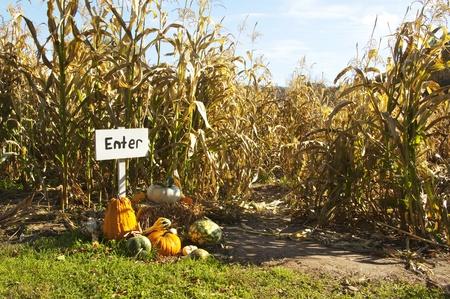 Corn Maze Фото со стока