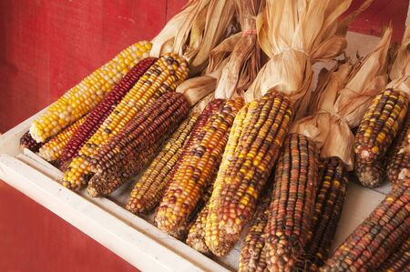 Indian corn for sale