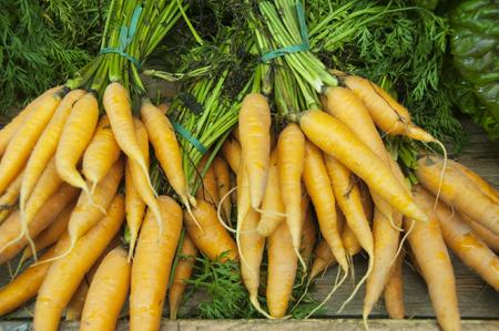 Fresh picked carrots