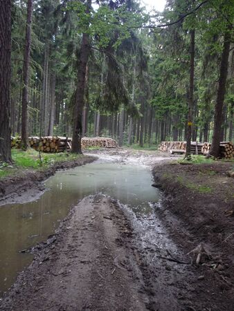 flooded: flooded road in deep forest