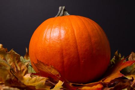 Pumpkin 스톡 콘텐츠