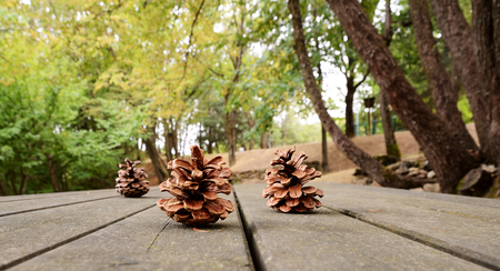 Pigne su tavolo dassi in legno nel bosco Stock Photo