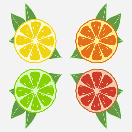 Citrus fruits with leaf. Orange, lime, lemon, grapefruit. Vector illustration. Çizim