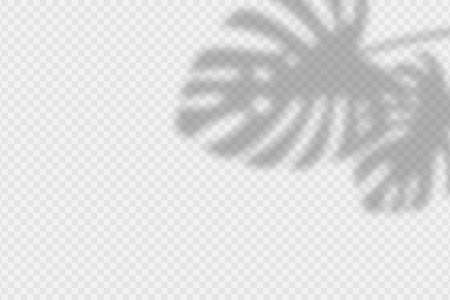 Shadow overlay of monstara leaves. Transparent overlay shadow effect from palm leaf. Realistic soft light effect of shadows and natural lightning on transparent background. Vector.