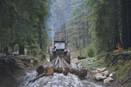 集材材トラクターが森の木を伐採を横滑りします。