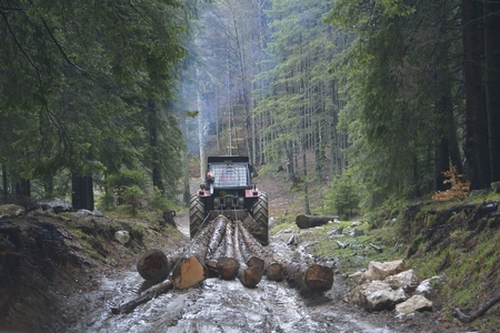 forest management: Skidding timber  Tractor is skidding cut trees out of the forest. Stock Photo