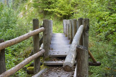 Bridge in bright forest.