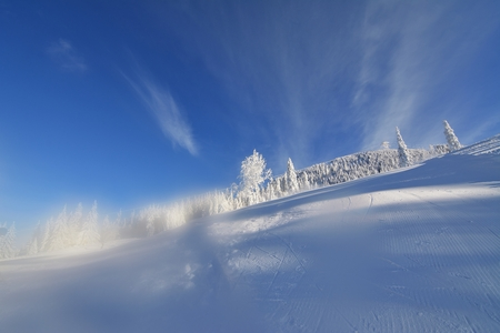 snowstorm: Snow covered trees after a snowstorm in the winter mountains Stock Photo