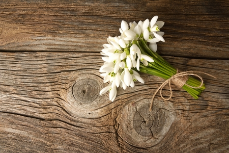 snowdrops bunch on wooden background