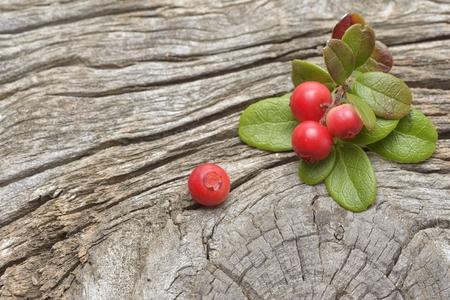 arandanos rojos: arándanos silvestres