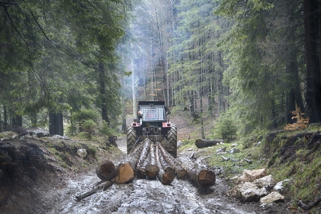 Skidding timber  Tractor is skidding cut trees out of the forest. Stock Photo