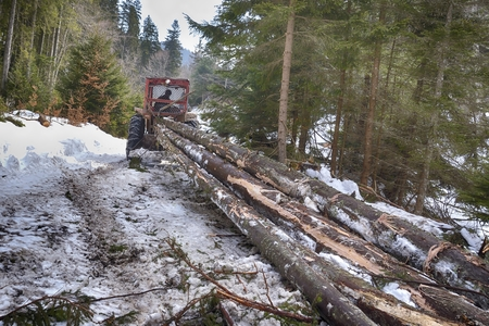 skidding: Skidding timber  Tractor is skidding cut trees out of the forest. Stock Photo