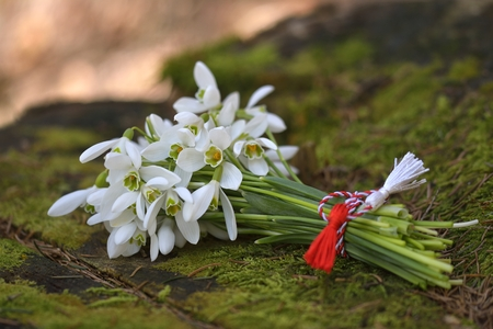 snowdrops, 1st of March tradition white and red cord martisor