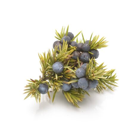 Juniper berries isolated on white background