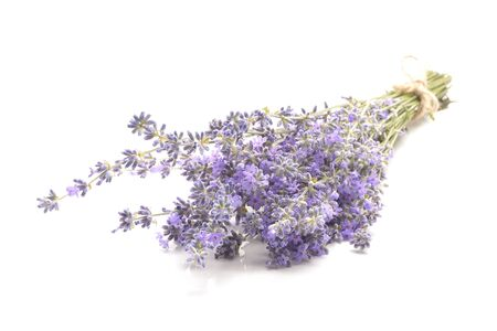 Lavender isolated on white background.